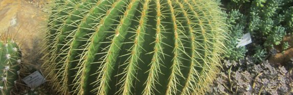 A story from Bertrid the Cactus